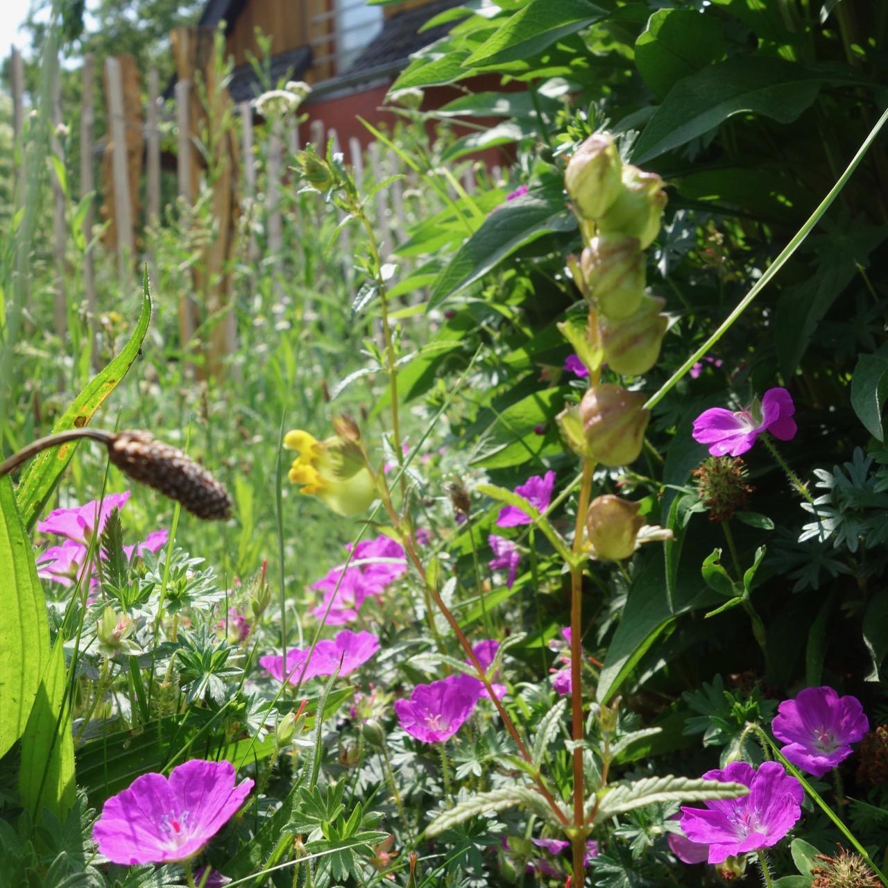 Naturgarten Ins Freie